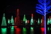 Sea of Trees light show